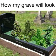 I like smokin' 420 weed cannabis ganja dead grave rip resinpieces Weed Jokes, Weed Humor, Medical Marijuana, Marijuana Plants, Ganja, Bob Marley, Herbs, Stoner Humor, Sugar Skull Tattoos