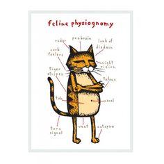 Feline physiognomy