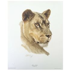 Print - Lioness by Guy Coheleach