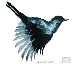 Adam S. Doyle's Birds