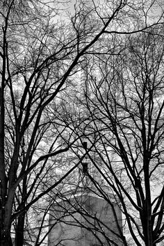 I See Them Like Trees Church steeple behind bare winter trees. First United Methodist Church. Lexington, NC  This image is to be printed on Ilford Professional True Black and White photographic silver gelatin paper- matte finish to last a lifetime.  Available at various sizes (See gallery home page) Framing or mounting options available.