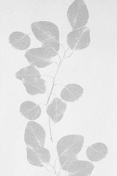 Image of Wallpaper - Leaf - Grey