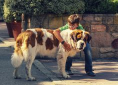 10 Reasons Big Dogs Are the Best Dogs  - CountryLiving.com