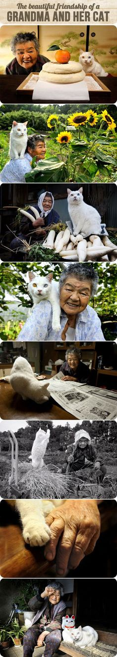 The beautiful friendship of a grandma and her cat…