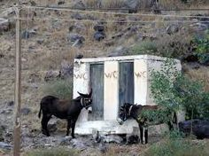 Two donkeys - a male & female -queuing for the toilets.  Thirassia island, Santorini, Greece - selected by www.oiamansion.com