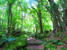 Jeju EcoForest