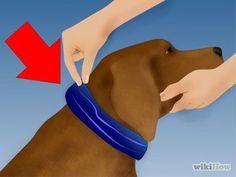 Get Rid of Ticks Around Your Home Step