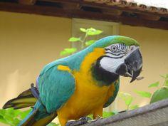 Pássaros Exóticos