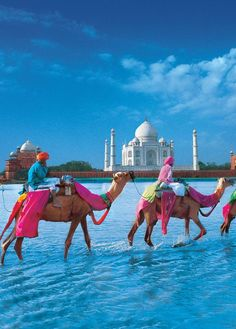 Camels and Taj Mahal India