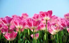 Você faz a Diferença: Hora de simplesmente florescer...