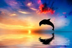 Beautiful Ocean And Sunset With Dolphin Jumping Photograph by ...