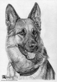 Wicked Training Your German Shepherd Dog Ideas. Mind Blowing Training Your German Shepherd Dog Ideas. Dog Pencil Drawing, Pencil Drawings Of Animals, Animal Sketches, Art Drawings Sketches, Drawing Art, Dog Sketches, Dog Drawings, Pencil Art, Drawing Ideas