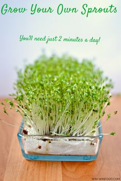 Sprouting - What Makes It So Great and Why Should You Do It