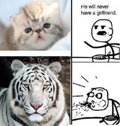in your face school bullies! Animal Captions, Animal Memes, Funny Animals, Cute Animals, Pretty Animals, Baby Animals, Funny Cute, Hilarious, Cereal Guy