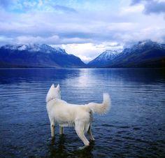 perro fotos naturaleza