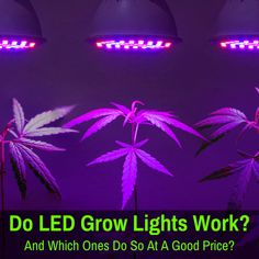 Learn whether LED grow lights actually live up to the hype, how they work, and what to look for to ensure you get one that works well, because many of them do not. Purple Plants, Grow Lights For Plants, Light Take, Light Emitting Diode, Plant Lighting, Led Grow, Types Of Lighting, Plant Needs, Growing Plants
