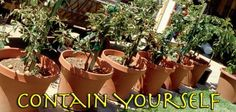 The art of growing potted patio fruit orchards Indoor Fruit Trees, Orchards, Garden Planning, Container Gardening, Planter Pots, Outdoors, Patio, How To Plan, Plants
