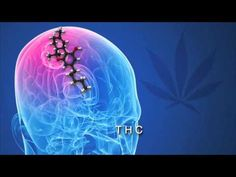 Science Explains How Cannabis Kills Cancer Cells | CBD-Healthcare News - https://www.youtube.com/watch?v=5RtRil2ND-E