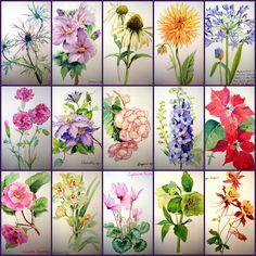 flowers a-z Adelene Fletcher