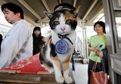Le Japon pleure Tama, sa chatte superchef de gare - Libération