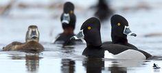 Delta Photo Gallery - Spring Migration 2014