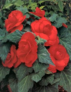 Shop Fall Flowers And Flower Blubs At Holland Bulb Farms Bulb Flowers Fall Flowers Flowers