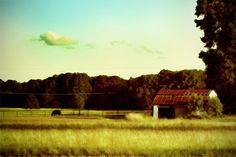 Rural Arkansas  Rural Arkansas at it's finest. This was taken between Jacksonville and Cabot, AR.  Billm Evans Photo