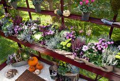 Vackra höstplanteringar i växthuset.