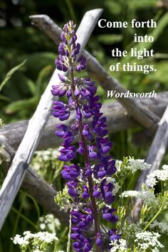 """Come forth into the light of things.""  -- William Wordsworth – on image by Florence McGinn in the memorable, natural beauty of Canada's Newfoundland.  Explore more, essential nature quotes providing insights into connections at http://www.examiner.com/article/twelve-essential-nature-quotations"