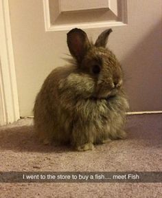 18 Animal Memes That Are Funny - Funny Animal Quotes - - 18 Animal Memes That Are Funny I Can Has Cheezburger? The post 18 Animal Memes That Are Funny appeared first on Gag Dad. Funny Animal Memes, Cute Funny Animals, Funny Animal Pictures, Cute Baby Animals, Funny Cute, The Funny, Funny Pics, Funny Stuff, Animal Pics