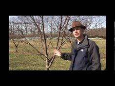 How to Prune an Old, Neglected, Out of Control Fruit Tree in Early Spring - Gurney's Video
