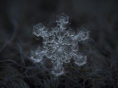 Amazing Macro-Photography of Individual Snowflakes Photographer Alexey Kljatov is able to take these fleeting moments of magnificence and turn them into lasting close-up photos Snowflake Photography, Macro Photography Tips, Micro Photography, Nature Photography, Fotografia Macro, Close Up Photos, Cool Photos, Amazing Pictures, Snowflake Pictures