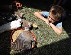 természetszeretet állatbarátok Pets