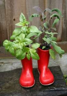 Red wellies make great planters! Outdoor Planters, Planter Pots, Red Wellies, Red Hunter Boots, Unusual Plants, Garden Projects, Garden Ideas, Container Plants, Small Gardens