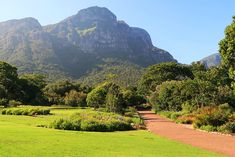 Things to do in Cape Town Kirstenbosch National Botanical Gardens Walk in the Treetops at Kirstenbosch