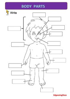The parts of the body interactive and downloadable worksheet. Check your answers online or send them to your teacher.