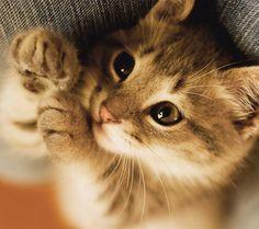Beautiful cats / 本日の美人猫vol.36 - 猫ジャーナル