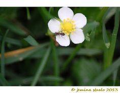 Jemina Staalon multimediavakka: Kukkia mehiläisiä murkkuja Maailma kylässä 2013