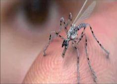Drones of War US New Alien Tecnology