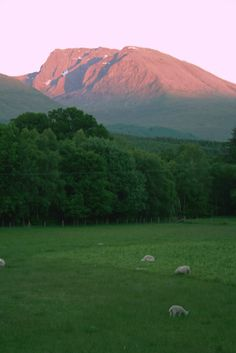 Sun set on Ben Nevis Ben Nevis, Scottish Highlands, Scotland Travel, British Isles, Geology, Travel Inspiration, Software, Beautiful Pictures, Castle
