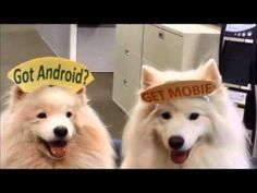 Rapping White Dogs - YouTube, Mobie for Android