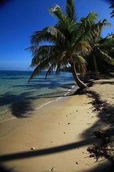 FB page - Sally Lee by the Sea ♥ {Moorea Beach Palm, Tahiti Photo: http://pinterest.com/pin/215891375859811654/}