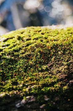 Just Some Moss  - http://earth66.com/macro/just-moss/