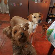 #Ratos en #Casa con Penny, Timón, Benita y Chico 12/17 #Mascotas #Peludos