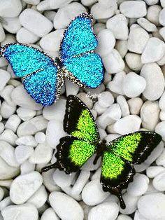 Butterfly #WONDERS**