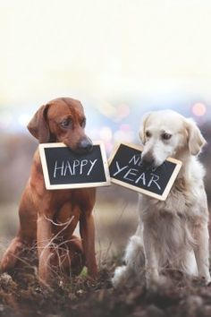 Pin on Feliz ano novo! Happy Birthday 1, Birthday Greetings, Birthday Cards, Facebook Birthday Wishes, Happy New Year Dog, Happy B Day, Nouvel An, Birthday Images, Birthday Quotes