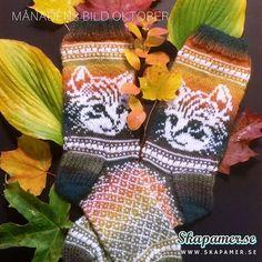 Knitting Socks, Knit Socks, I Love Cats, Fingerless Gloves, Arm Warmers, Cats And Kittens, Crochet, Instagram Posts, Crafts