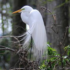 Egret teaches to stand in the physical and spiritual worlds. He teaches healing of the emotions in order to bridge the heart and mind. This also correlates to grounding properties in order to receive and process spiritual and emotional insights for clarity. Egret helps look deeper into aspects of life, brings out innate wisdom and shows how to become self-reliant.