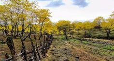 Sur de los Andes, Ecuador, lugar donde se instala el Bosque Seco, el cual acaba de ser declarado como reserva de la biosfera por la UNESCO.  Más de 500.000 hectáreas  pasarán a formar parte de la Red Mundial de Reserva de la Biosfera de la Unesco.