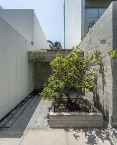 Ghezzi Novak, Renzo Rebagliati · Entrance and terrace